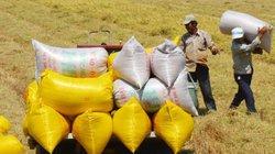"""Kỳ tích khai phá """"rốn phèn"""" miền Tây: Tăng giữ nước, giảm trồng lúa..."""
