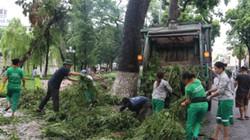 Gần 800 tấn rác được Hà Nội thu dọn sau bão số 1