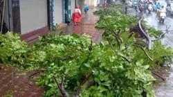 Hôm nay, giải tỏa xong lượng cây đổ trên địa bàn 4 quận do bão số 1