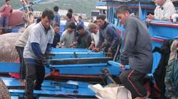 Ngư dân yên tâm bám biển nhờ bảo hiểm trợ lực