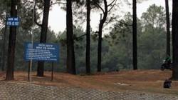 Trao quyền chủ rừng cho nông dân