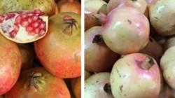 Chủ cửa hàng hoa quả sạch giúp phân biệt lựu Trung Quốc và lựu Việt Nam