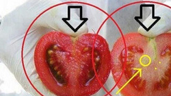 Cách nhận biết cà chua biến đổi gen