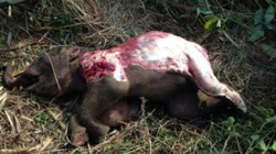 Phát hiện voi con chết trong Vườn quốc gia Yok Đôn