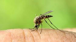 Lâm Đồng: Trường hợp đầu tiên tử vong do sốt xuất huyết