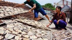 Thủy triều đỏ làm cá chết hàng loạt ở Thanh Hóa
