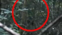 Phát hiện dấu hiệu của dã nhân Bigfoot bí ẩn
