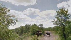 Những trải nghiệm kích thích nhất định phải thử khi đến Nam Phi