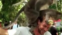 """Clip: """"Đỏ mặt"""" với cảnh khỉ giao phối trên đầu du khách ở đảo Bali"""