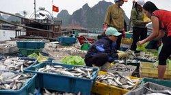 Đánh bắt, tiêu thụ hải sản 4 tỉnh: Lập bản đồ vùng biển cấm!