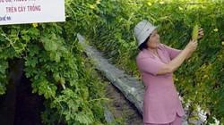 """Làm nông """"chui"""" trên đất quy hoạch"""