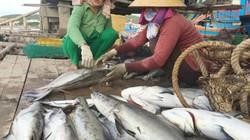 Nước thải của cơ sở chế biến hải sản làm chết cá lồng nuôi