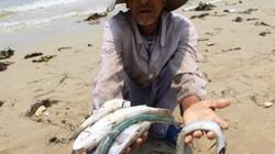 7 nhóm đối tượng được bồi thường do sự cố môi trường biển là ai?