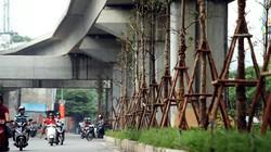 Vì sao Hà Nội trồng cây xanh dưới gầm đường sắt?