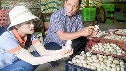 Hiệu quả cao từ mô hình nuôi vịt đẻ khép kín