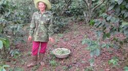Bớt đất rừng để… giữ rừng xanh, dân ấm no