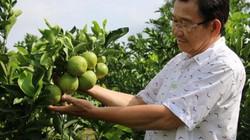 Lão nông tiết kiệm được vài chục triệu phân thuốc nhờ sản xuất sạch