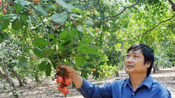 """Giúp nông dân """"thủ phủ"""" cây điều làm giàu"""
