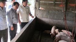 Xót xa: Giá lợn giảm mạnh, bệnh lở mồm long móng tăng cao
