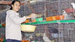 Phụ nữ văn phòng nuôi đàn chim câu, không nhanh giàu cũng khấm khá