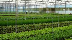 Sợ rủi ro, DN không dám đầu tư nông nghiệp công nghệ cao