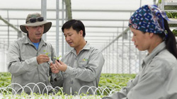 Clip:Doanh nghiệp-nông dân đồng hành làm giàu từ nông nghiệp