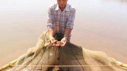"""Nhà nông Rạng Đông nuôi cá bống bớp chưa bao giờ phải """"giải cứu"""""""