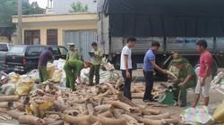 Thanh Hóa bắt giữ vụ vận chuyển ngà voi khủng nhất từ trước tới nay