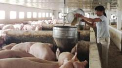Giá lợn hơi tăng lên 45.000 đồng/kg là chuyện không khả thi