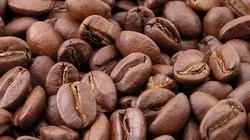 Giá nông sản hôm nay 13.7: Cà phê tăng 500 đ/kg, tiêu làm đại lý mừng hụt