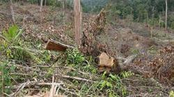 Khởi tố vụ phá rừng quy mô lớn ở Lâm Đồng