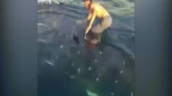 Từ thuyền nhảy xuống lưng cá mập lướt sóng vi vu trên biển