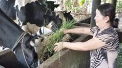 Quỹ Hỗ trợ nông dân tiếp sức cho ý tưởng làm giàu của nhà nông