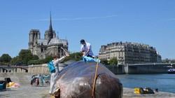"""Cá voi khổng lồ """"phơi nắng"""" giữa lòng Paris gây sốc"""