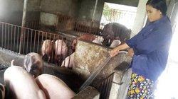 Giá lợn hôm nay 25.7: Miền Bắc đảo chiều tăng 1.500 đ/kg, miền Tây 32.000 đ/kg, Đồng Nai 35.000 đ/kg