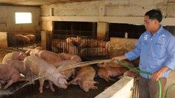 Chủ trại lợn 12 tỷ đồng gửi tâm thư Bộ trưởng NNPTNT, Thống đốc