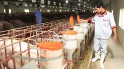 GIÁ LỢN HÔM NAY 27.7: Miền Bắc giảm 3.000 đ/kg, Đồng Nai giữ giá, Trung Quốc nhập lợn lại