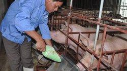 Ngân hàng NNPTNT Bắc Giang sẽ xem xét cho chủ trại lợn 12 tỷ vay vốn