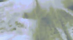 Cá mập đau đớn tột cùng vì bị buộc vào thuyền cao tốc