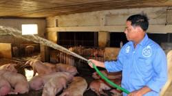 Chủ trại lợn 12 tỷ muốn vay 10 tỷ, ngân hàng chỉ đồng ý 3 tỷ đồng