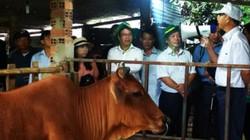 Giúp nông dân Tây Nguyên chăn nuôi bền vững, hiệu quả