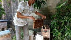 """Mới, lạ: Thong thả nuôi ong ven biển, mật đắt hàng, """"bỏ ống"""" 200 triệu/năm"""