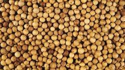 Giá nông sản hôm nay 1.8: Tiêu bị kiểm dịch 100%, cà phê tiếp tục giảm nhẹ
