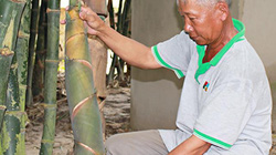 Chỉ trồng có 3 sào tre Tứ Quý, mỗi tháng lời hơn 10 triệu đồng