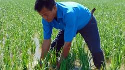 """""""Kỹ sư"""" nông dân và kỳ tích tạo ra 5 giống lúa đặc sản"""