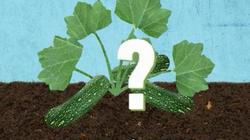 Những sự thật thú vị về đất trồng ít ai biết