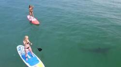 Rùng mình 2 người đẹp bikini bị 5 cá mập trắng bủa vây