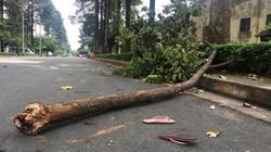 Vụ nhánh cây rơi trúng nữ công nhân: Người mẹ trẻ mãi mãi bỏ lại 2 con thơ