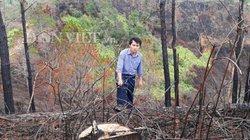 Kon Tum: Chặt 100ha rừng thông đẹp như trong phim trồng mắc ca