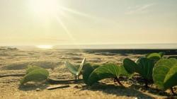 """Gần Hà Nội có một """"hoang đảo Robinson"""" tuyệt đẹp và bình yên đến lạ"""